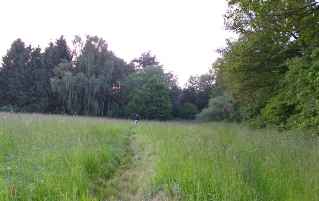 Flurstueck11-Eichenreihe-rechts-Sued-Nord-Blick-2013