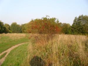 Hummelsee-Herbst-2014-02